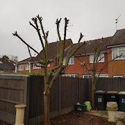 After Tree Pruning Toton