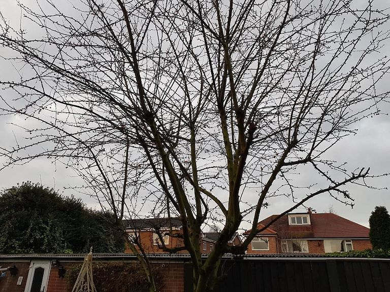 Before Tree Pruning Toton